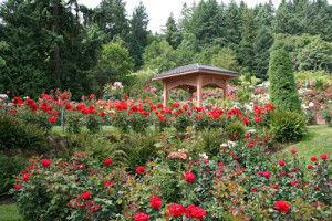 9.InternationalRoseTestGarden